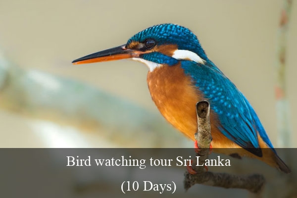 Bird Watching Tour in Sri Lanka