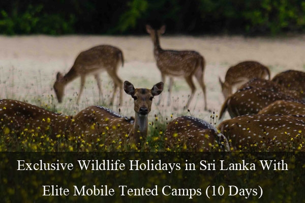 Wildlife Holidays in Sri Lanka
